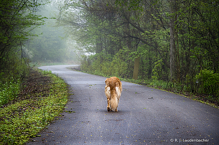 Walk Your Path