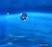 Blue diamond drop...