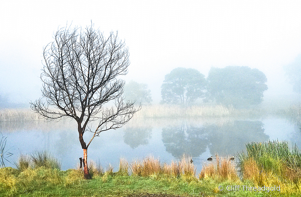 Morning Mist, Cranbourne RBG