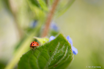 Ladybug butt