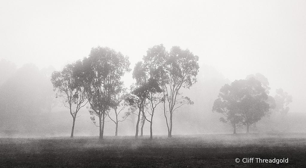 Copse through the mist