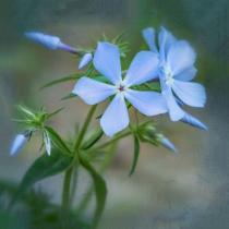 The beauty in feeling blue