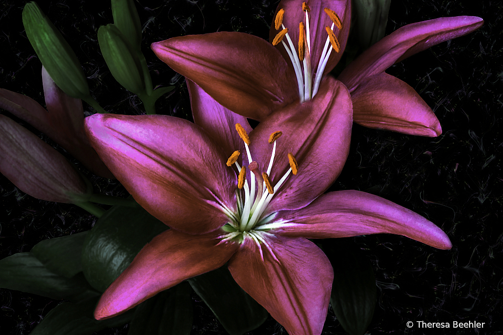 My Mom's Lily