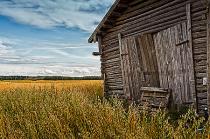Barn Doors And Rye Field