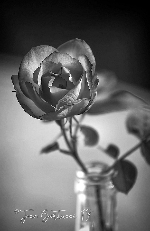 Rose in a Bottle B&W