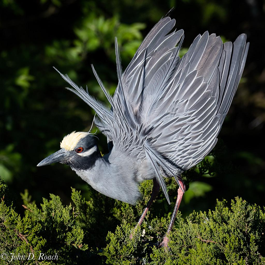 Ready to Fly - ID: 15729718 © John D. Roach