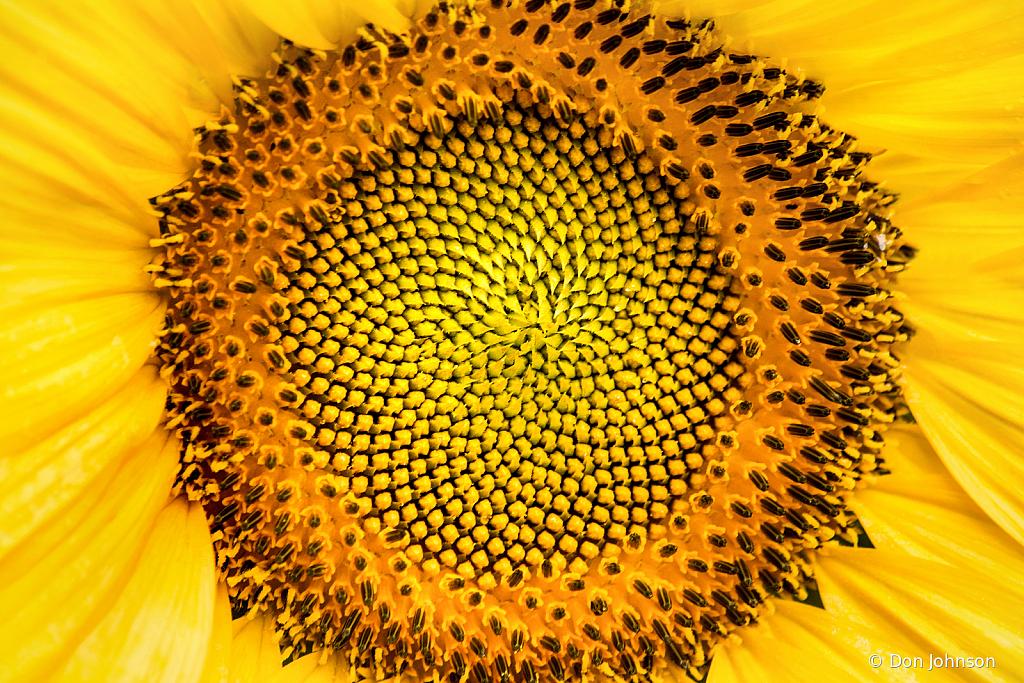 Center of a Sunflower 7-7-19 192