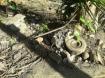 stone grinder - r...
