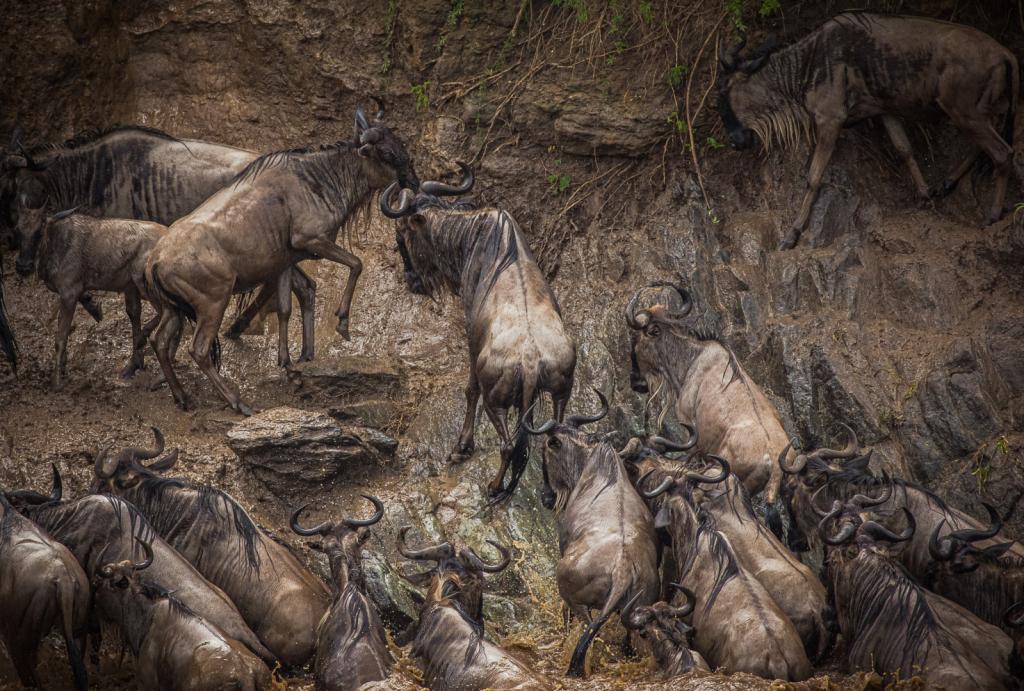 Migration Chaos