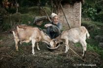 Tending the goats