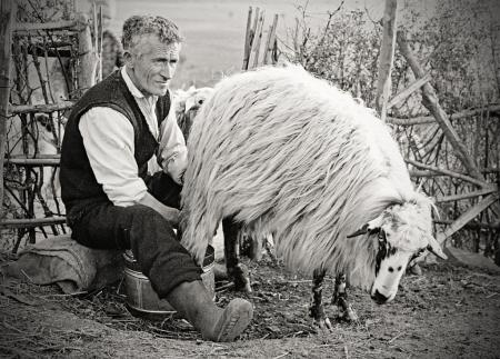Milking on the village.