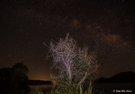 The lone tree and Milky Way