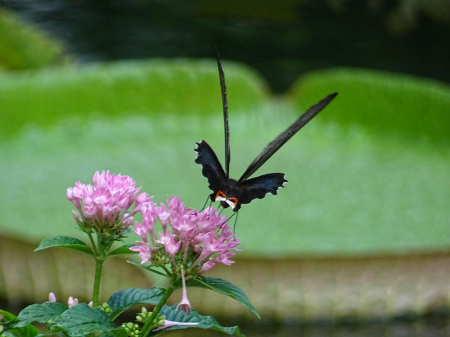 Butterfly and flower-2