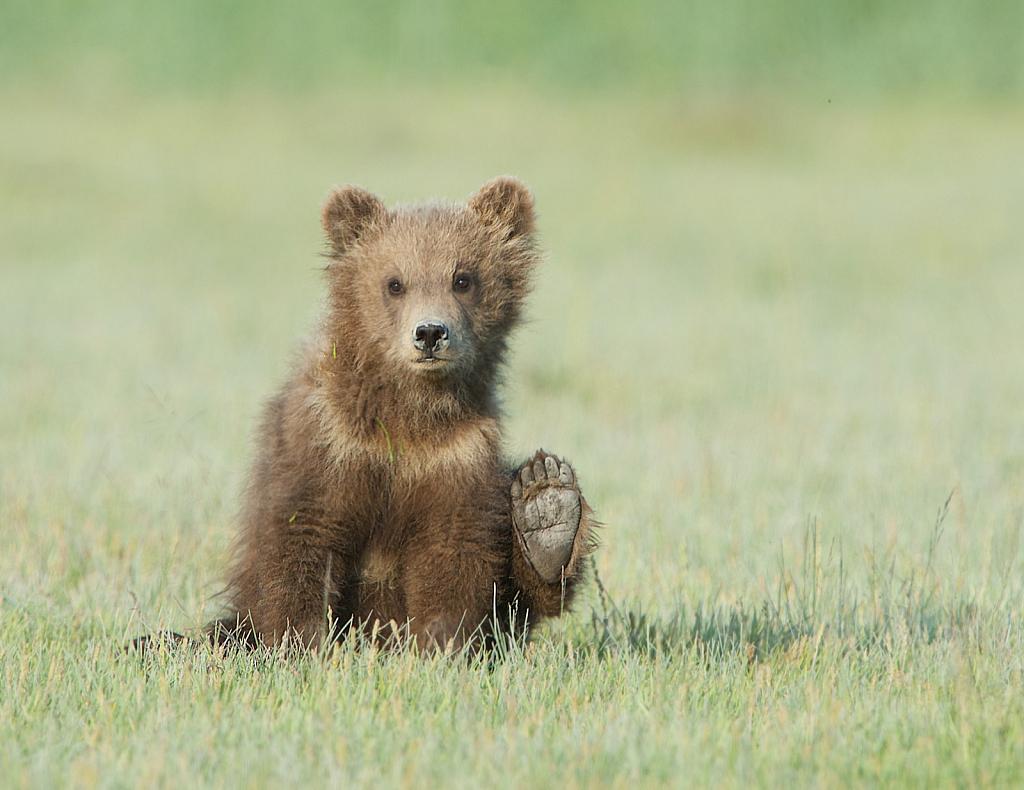 Waving Hello From Alaska - ID: 15733557 © Kitty R. Kono