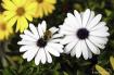 Flowers - Sweet B...