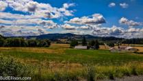 Summer Morning - Yamhill County, Oregon