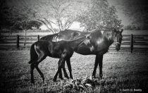Black Horses at Dusk