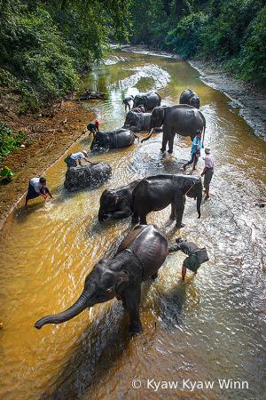 Men & Elephants