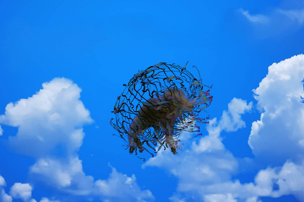 It's a Bird, It's a Plane, It's a Jellyfish