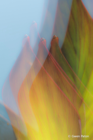 Leaves in Abstract