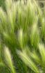 Grasses in the Wi...