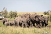 Elephant4154