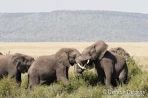 Elephant4343