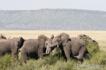 Elephant4350