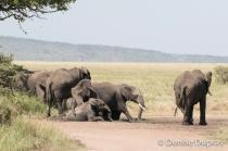 Elephant4422
