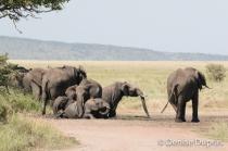 Elephant4432