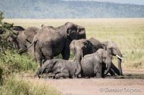 Elephant4448