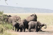 Elephant4472