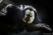 Animals - Saki Mo...