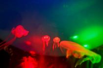 Tiny Jellyfish Twins