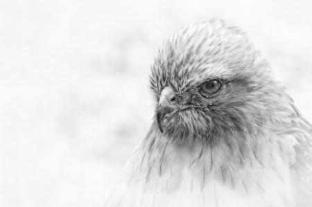 Rescue Hawk