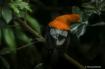 Animals - Orange ...