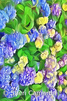 Hydrangea Blue Art
