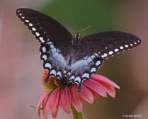 Beauty on Wings