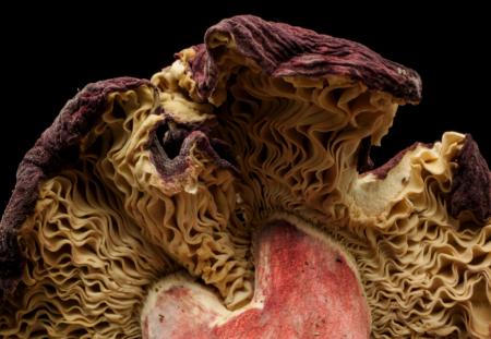 Fungus Underside