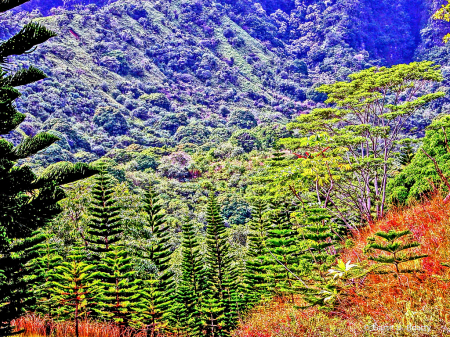 Oahu Plantation
