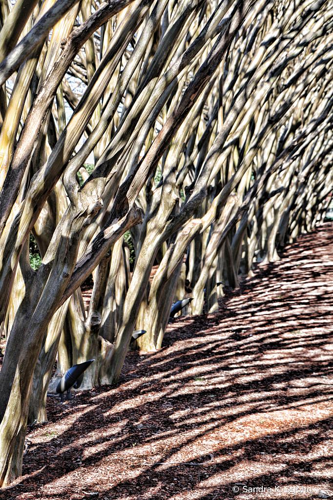 branches - ID: 15738460 © Sandra K. StJohn