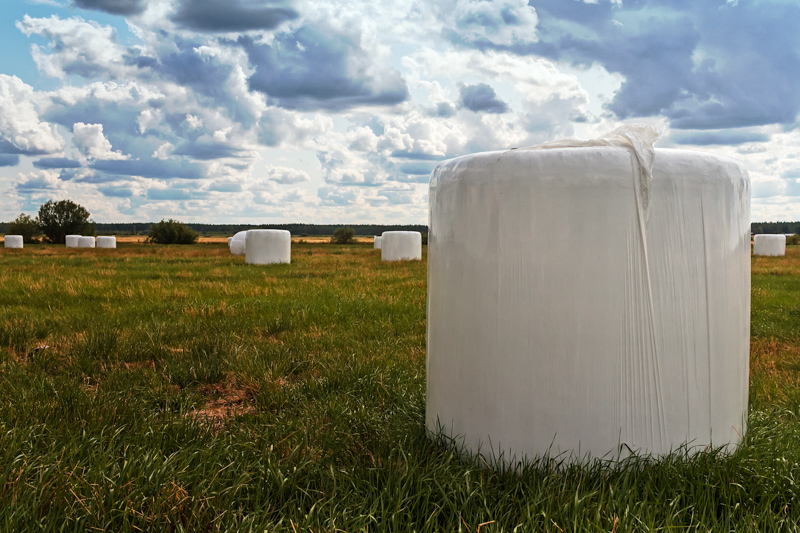 White Bales On The Field