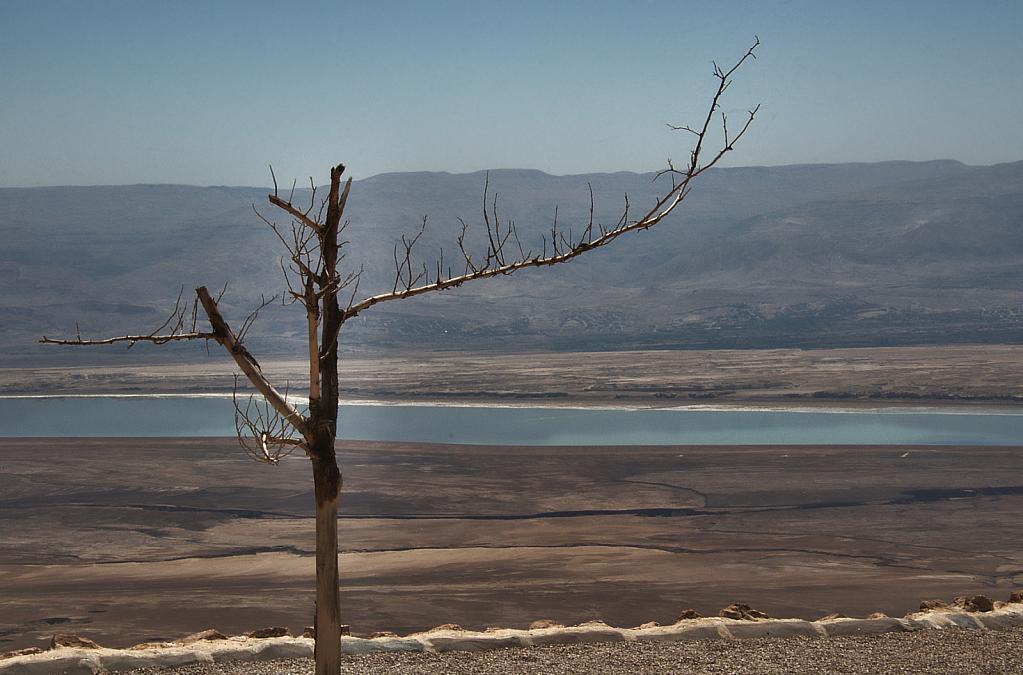 Dead Sea Dead Tree
