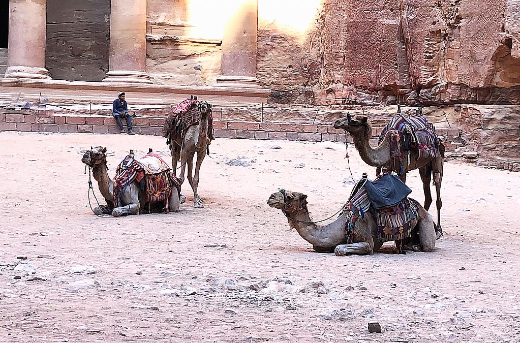 Camel Quartet at Petra