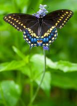 Garden Wings