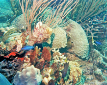 Coral Gardens in BVI