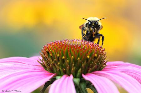 Bee #10