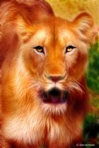 Artistic Portrait of a Lioness 6-23-19 147
