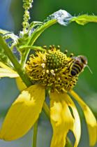 Summer Pollination