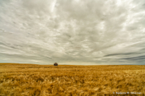 Piece of history in North Dakota wheat field